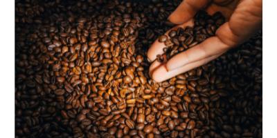 Sommelier espresso